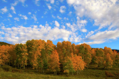 Art Print featuring the photograph Aspens by Steve Stuller
