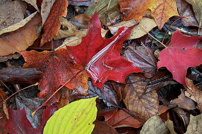 Fall Photograph - Autumn Leaves by John-Paul Fillion