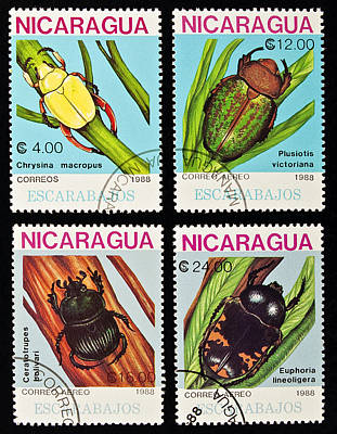 Tropical Stamps Photograph - Beetles Stamps Collection. by Fernando Barozza