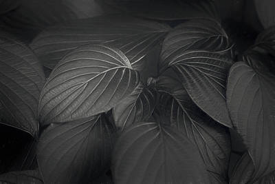 Royalty-Free and Rights-Managed Images - Black Leaves by Scott Norris