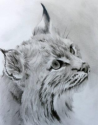 Bobcat Art Drawing - Bobcat by Geri Dunn