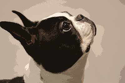 Photograph - Boston Terrier by Donna G Smith