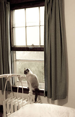 Antique Photograph - Cat At Home by Marilyn Hunt