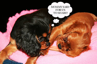 Puppy Digital Art - Cavalier King Charles Spaniel Let's Share by Daphne Sampson