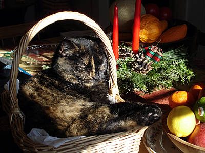 Christmas Cat Basket Art Print by Laura Tasheiko