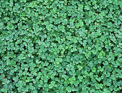 Directly Above Photograph - Clover Field by Daniela Duncan