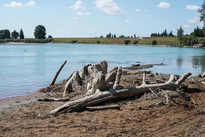 Photograph - Driftwood On The Skagit by Tom Cochran