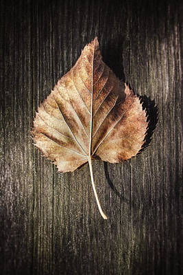 Royalty-Free and Rights-Managed Images - Dry Leaf on Wood by Scott Norris