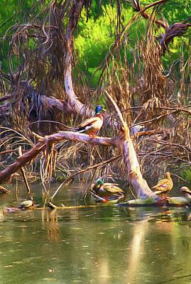 Digital Art - Ducks Of El Dorado Nature Center by Joseph Hollingsworth