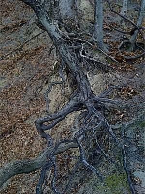Embossed Roots Art Print by Rachel Blomberg