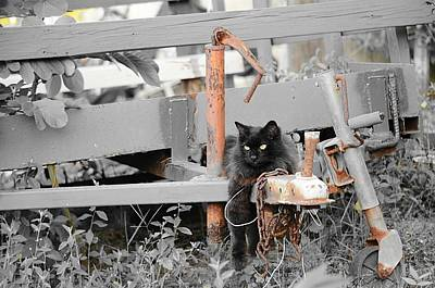 Photograph - Farm Kitty Hanging Out by Lynda Dawson-Youngclaus