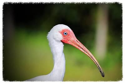 Photograph - Florida Bird by Pascal Schreier