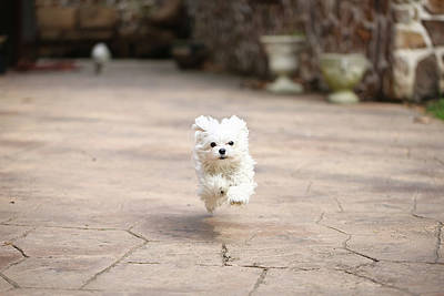 White Dogs Photograph - Flying Dog by moments caught Photography