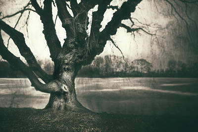 Royalty-Free and Rights-Managed Images - Gnarled Old Tree by Scott Norris