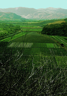 Photograph - Green Crops Buelton by Gary Brandes