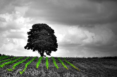 Farm Scenes Photograph - Green N Black   by Emily Stauring