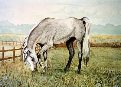 Painting - Grey Arabian by Jan Amiss