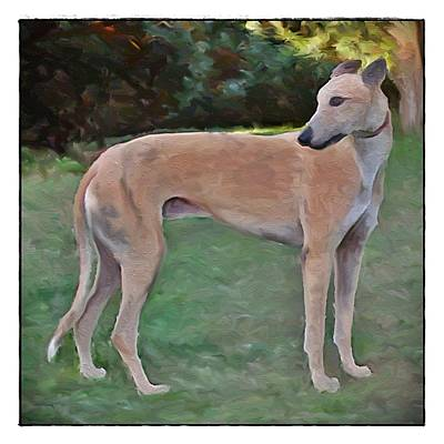 Greyhound Standing Rendered 103 Art Print by Terry Mulligan
