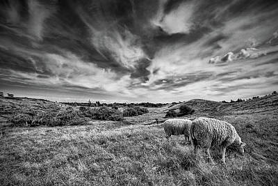 Photograph - Heather Hills I by Stefan Nielsen