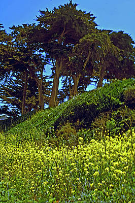 Photograph - hill top Cypress by Gary Brandes
