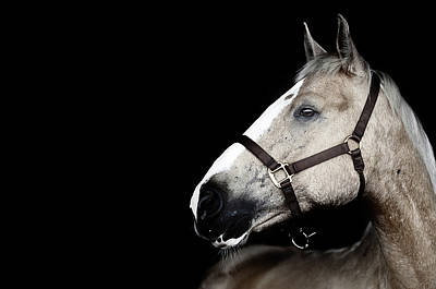 Close Up Horses Photograph - Horse by Arman Zhenikeyev - professional photographer from Kazakhstan