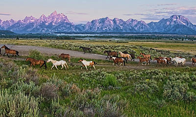 Teton Mountains Photograph - Horses Walk by Jeff R Clow