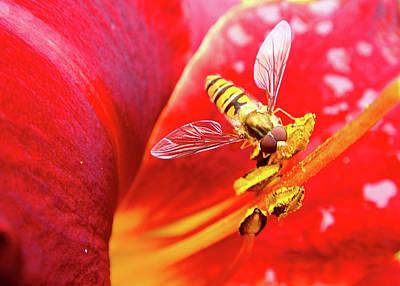 Hoverfly Art Print by Roberto Alamino