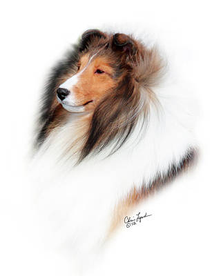 Sable Sheltie Photograph - Jkc Jcc Ch Seaside Fairy Jp Indy Rider-5 by Chris Lynch