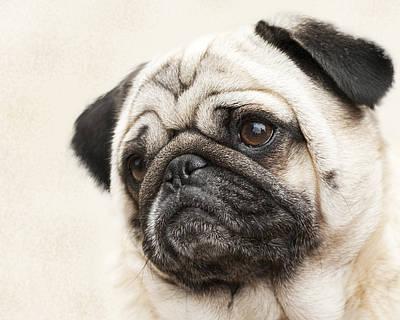 L-o-l-a Lola The Pug Art Print