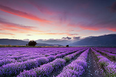 In A Row Photograph - Lavender Field by Evgeni Dinev Photography