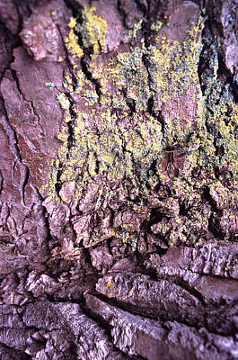 Lichens Photograph - Lichen On Tree Bark by John Foxx