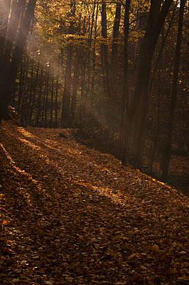 Sun Photograph - Light Breaking Thru by Andrew Soundarajan
