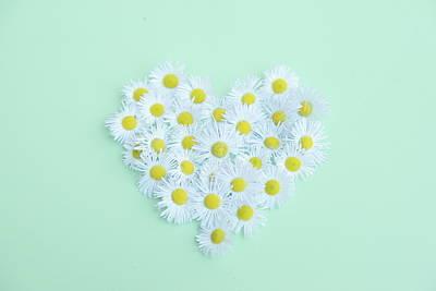 Idea Photograph - Little Daisy by Poppy Thomas-Hill