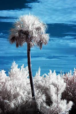 Surreal Landscape Photograph - Lonesome Palm by Bob Pomeroy