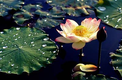 Lotus Leaves Photograph - Lotus In Water by Lian Wang