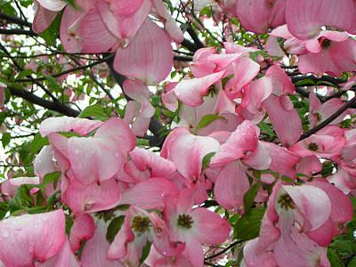 Magnolias Art Print by Heather Weikel