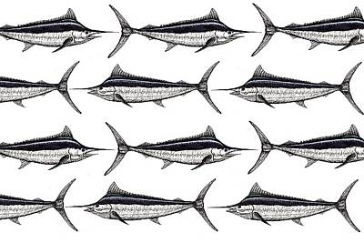 Contender Digital Art - Many Marlin by Jay Talbot