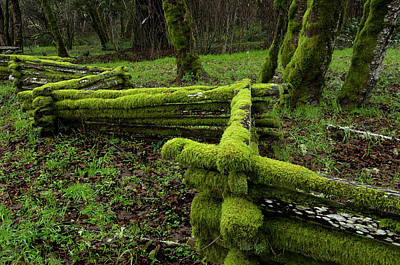Cedar Fence Photograph - Mossy Fence 4 by Bob Christopher