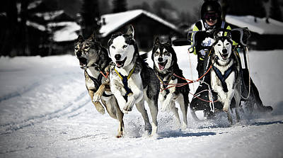 Winter Landscapes Photograph - Mushing by Daniel Wildi Photography
