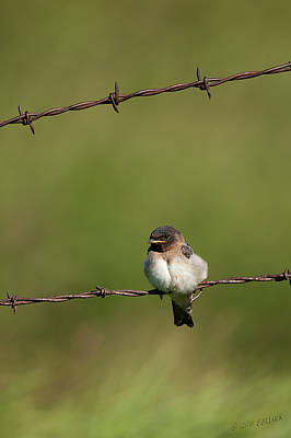 Swallow Photograph - No Boundries by Beve Brown-Clark Photography