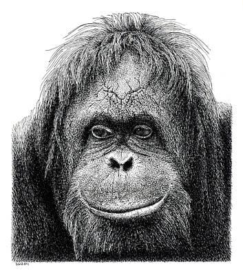 Orangutan Drawing - Orangutan by Scott Woyak