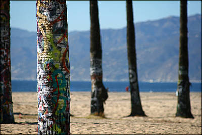 Venice Beach Palms Photograph - Painted Palms by Shane Rees