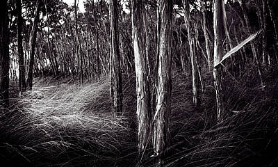 Coastal Forest Photograph - Paperbark Forest by Tim Nichols