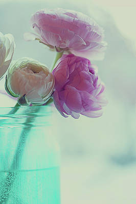 Colors Photograph - Pink And White Ranunculus Flowers In Vase by Isabelle Lafrance Photography