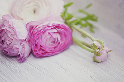 Focus On Foreground Photograph - Pink Ranunculus Flowers On White Wooden Shelf by Isabelle Lafrance Photography