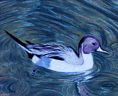 Pastel - Pintail by Jan Amiss