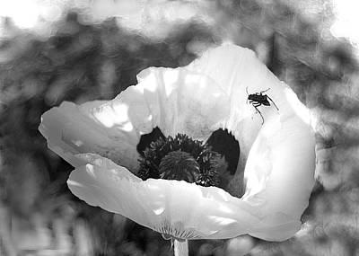 Poppie Digital Art - Poppie Wasp by Priscilla Rink