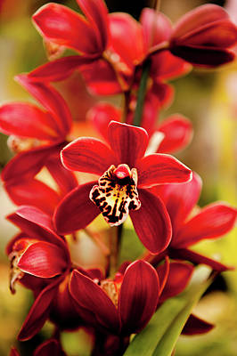 Focus On Foreground Photograph - Red Orchid Flowers by Dan Pfeffer