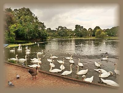 Geese Painting - Roath Park And Lake by Andrew Read