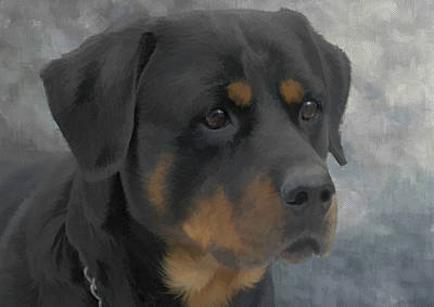 Rotty Painting - Rottweiler Portrait by JG Keevil